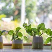 Conseils pour l'achat et l'entretien des plantes d'intérieur