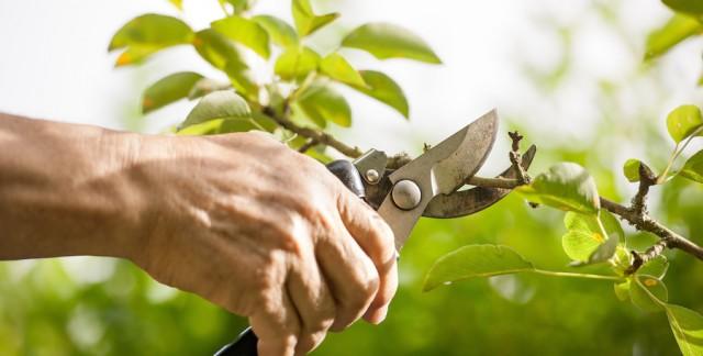 L'élagage: une coupe préventive pour vos arbres