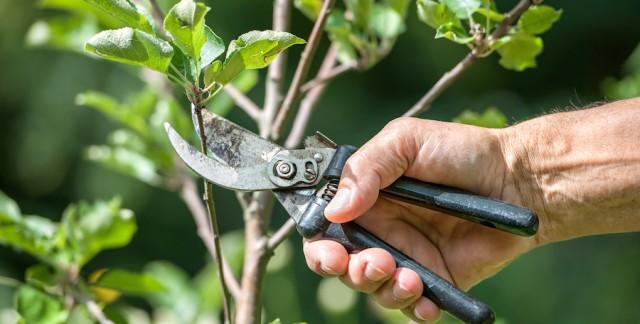 L'entretien des arbres au printemps