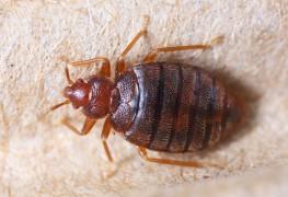 Oui, il est possible de repousser les insectes hors de chez soi de façon biologique