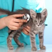 Quatre raisons de dire «oui» aux produits d'assurance pour animaux