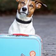 Voyager avec votre animal de compagnie de façon sécuritaire et légale