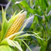 Rotation des cultures pour augmenter les récoltes