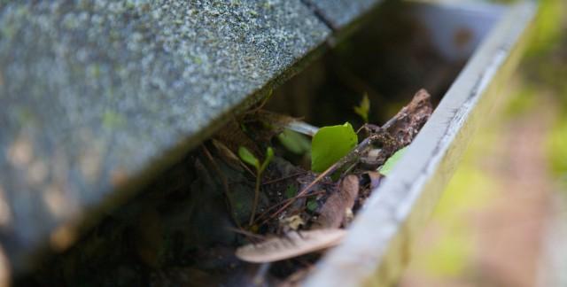 4 conseils pour nettoyer les gouttières sécuritairement