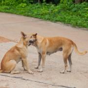 2 solutions maison aux puces de votre chien