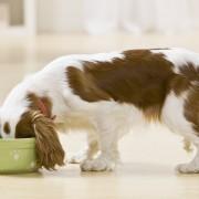 Nourriture et friandises maison délicieuses pour chiens