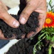5 types d'engrais biologiques et leur utilisation