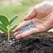 Les bases de l'engrais: tout ce que vous devez savoir