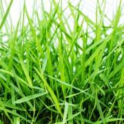 Économisez en faisant pousser du gazon à partir de semences