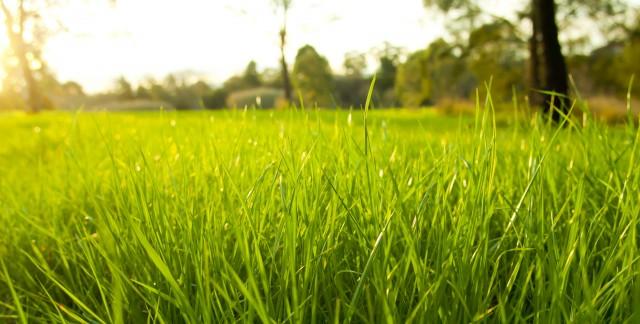 Conseils pour faire pousserune belle pelouse