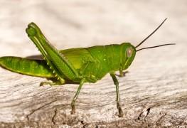 Solutions biologiques pour se débarrasser des parasites de jardin