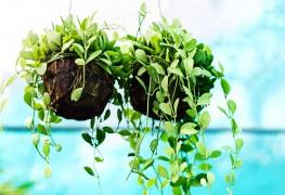 6 tapes simples pour nettoyer les plantes d 39 int rieur for Plante exterieur plumeau