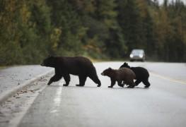 Comment éviter les ours en camping