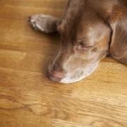 7 types de planchers idéals pour les animaux de compagnie
