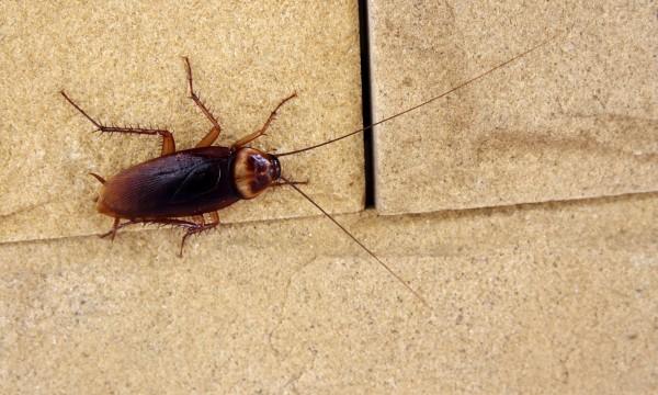 Causes à Lorigine Dune Infestation Dinsectes Dans La Maison - Insecte humidite salle de bain