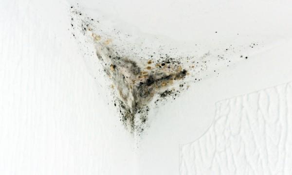 Quels sont les types de moisissure les plus courants trucs pratiques - Type de moisissure maison ...