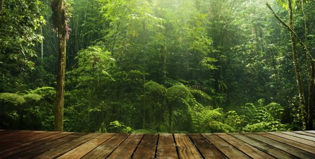 Parquet Bois Dur Ecologique : Types de planchers si vous aimez le bois trucs pratiques