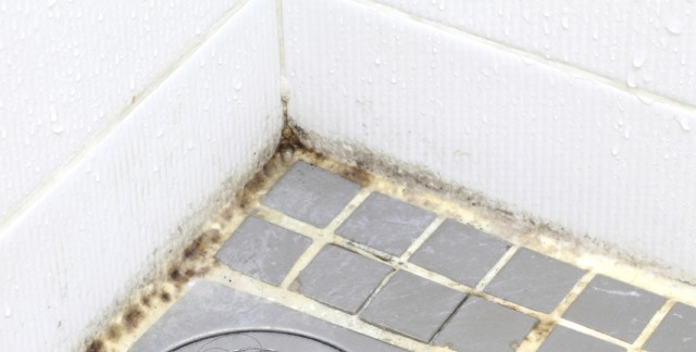 Comment liminer la moisissure dans la salle de bain for Moisissure salle de bain