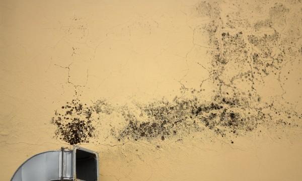 Comment v rifier si l 39 air de votre maison contient de la moisissure tru - Champignon maison dangereux ...