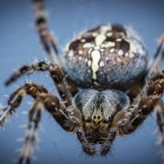Les 5 insectes les plus dangereux : que faire?