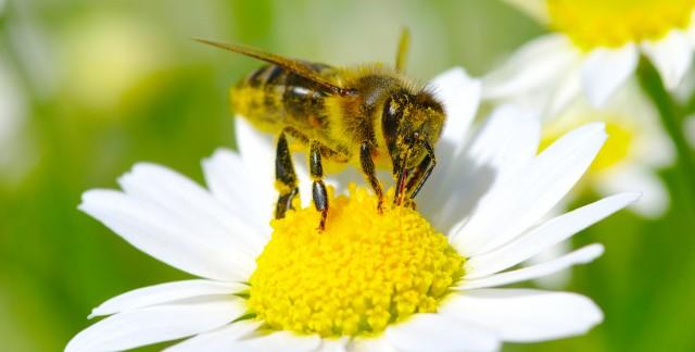 3 insecticides astucieux à faire soi-même