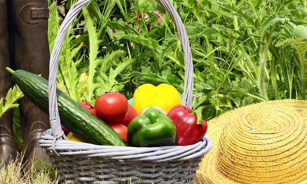 Bien savoir jardiner 6 principes de base trucs pratiques for Savoir jardiner