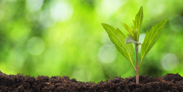 6 façons de préparer votre cour pour y jardiner