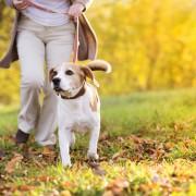 Remèdes faciles et traitements à domicile pour les piqûres d'insectes devotre chien