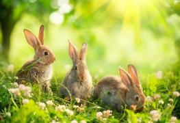 Comment garder les lapins hors de votre jardin