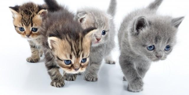 Conseils pour être un propriétaire d'animal de compagnie responsable