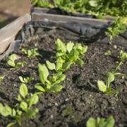 Les avantages d'un un jardin sur le toit