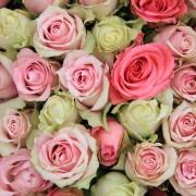 Les vertus de la rose