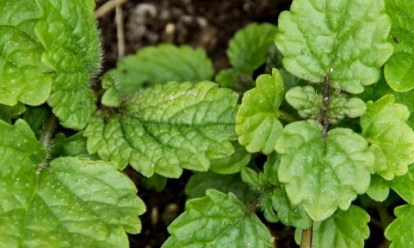 Tonnants jardins int rieurs d 39 herbes aromatiques faire - Faire un jardin d herbes aromatiques ...