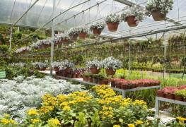 5 idées faciles pour acheter les meilleures plantes