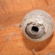 Conseils pour venir à bout des infestations d'insectes