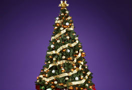 Spots in Edmonton to buy Christmas trees and wreaths