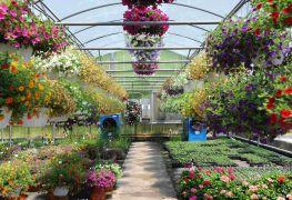 Let it grow: Garden Centres in Edmonton