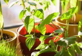 Expert advice on growing an indoor garden