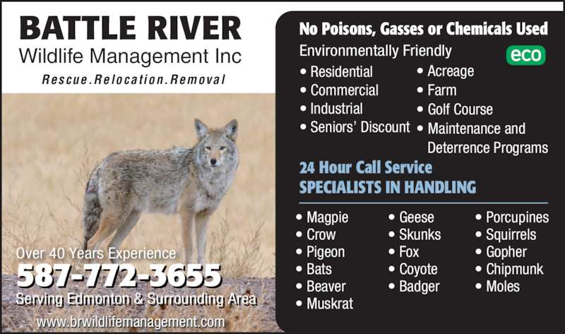 Battle River Wildlife Management Inc (780-490-0399) - Display Ad - ? Industrial ? Seniors? Discount 24 Hour Call Service SPECIALISTS IN HANDLING ? Magpie ? Crow ? Pigeon ? Bats ? Beaver ? Muskrat ? Geese ? Skunks ? Fox ? Coyote ? Badger ? Porcupines ? Squirrels ? Gopher ? Chipmunk ? Moles Rescue.Relocat ion.Removal ? Acreage ? Farm ? Golf Course ? Maintenance and     Deterrence Programs www.brwildlifemanagement.comil li 587 772 3655- - Serving Edmonton &  Surrounding Arear i  t   rr i  r Over 40 Years Experience BATTLE RIVER Wildlife Management Inc No Poisons, Gasses or Chemicals Used Environmentally Friendly ? Residential ? Commercial ? Industrial ? Seniors? Discount 24 Hour Call Service SPECIALISTS IN HANDLING ? Magpie ? Crow ? Pigeon ? Bats ? Beaver ? Muskrat ? Geese ? Skunks ? Fox ? Coyote ? Badger ? Porcupines ? Squirrels ? Gopher ? Chipmunk ? Moles Rescue.Relocat ion.Removal ? Acreage ? Farm ? Golf Course ? Maintenance and     Deterrence Programs www.brwildlifemanagement.comil li 587 772 3655- - Serving Edmonton &  Surrounding Arear i  t   rr i  r Over 40 Years Experience BATTLE RIVER Wildlife Management Inc No Poisons, Gasses or Chemicals Used Environmentally Friendly ? Residential ? Commercial
