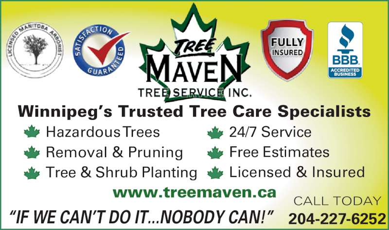 Tree Maven Tree Service Inc (204-227-6252) - Display Ad - Winnipeg?s Trusted Tree Care Specialists Hazardous Trees Removal & Pruning Tree & Shrub Planting 24/7 Service Free Estimates Licensed & Insured CALL TODAY 204-227-6252 www.treemaven.ca ?IF WE CAN?T DO IT...NOBODY CAN!?