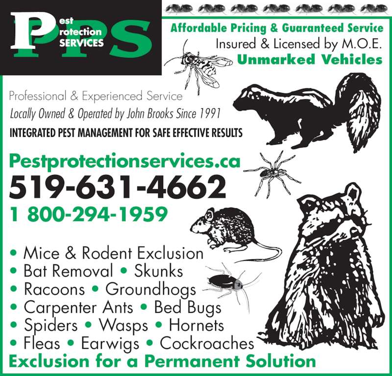 AAA Pest Protection Services (519-631-4662) - Display Ad - • Bat Removal • Skunks • Racoons • Groundhogs • Carpenter Ants • Bed Bugs  • Spiders • Wasps • Hornets • Fleas • Earwigs • Cockroaches Exclusion for a Permanent Solution Insured & Licensed by M.O.E. Unmarked Vehicles Affordable Pricing & Guaranteed Service Professional & Experienced Service INTEGRATED PEST MANAGEMENT FOR SAFE EFFECTIVE RESULTS 519-631-4662 1 800-294-1959 Pestprotectionservices.ca Locally Owned & Operated by John Brooks Since 1991 • Mice & Rodent Exclusion