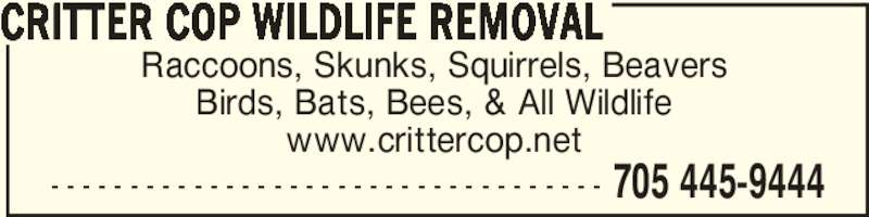 Critter Cop Wildlife Removal (705-445-9444) - Display Ad - - - - - - - - - - - - - - - - - - - - - - - - - - - - - - - - - - - - 705 445-9444 Raccoons, Skunks, Squirrels, Beavers Birds, Bats, Bees, & All Wildlife www.crittercop.net CRITTER COP WILDLIFE REMOVAL - - - - - - - - - - - - - - - - - - - - - - - - - - - - - - - - - - - 705 445-9444 Raccoons, Skunks, Squirrels, Beavers Birds, Bats, Bees, & All Wildlife www.crittercop.net CRITTER COP WILDLIFE REMOVAL