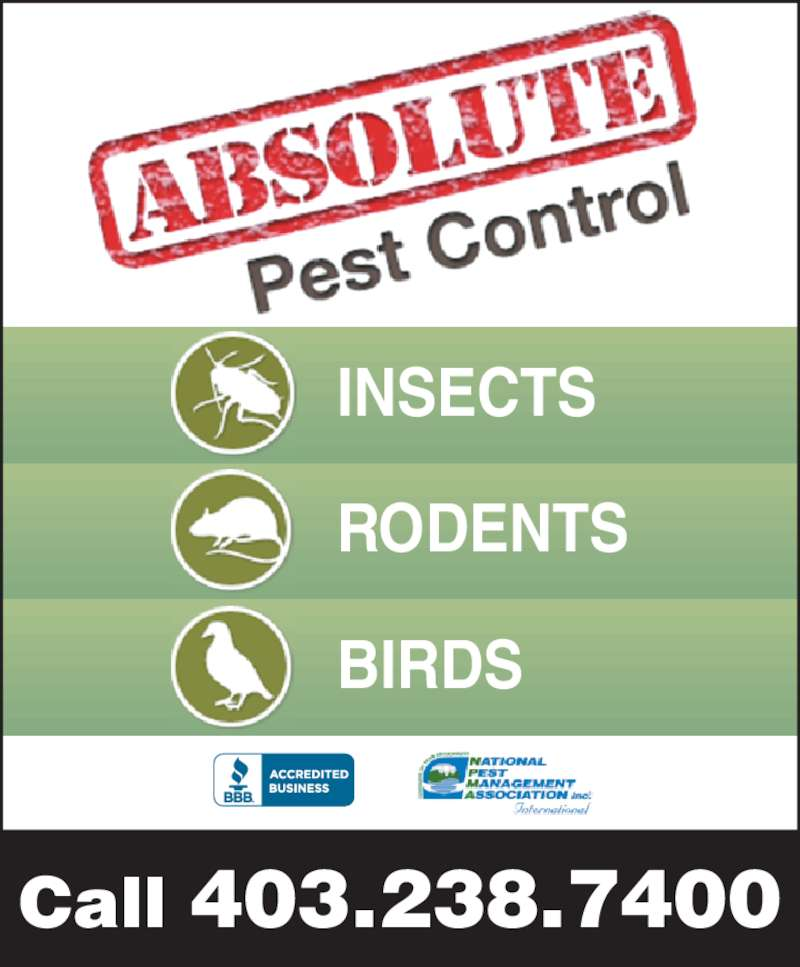 Absolute Pest Control Inc (403-238-7400) - Display Ad - Call 403.238.7400 INSECTS RODENTS BIRDS Call 403.238.7400 INSECTS RODENTS BIRDS