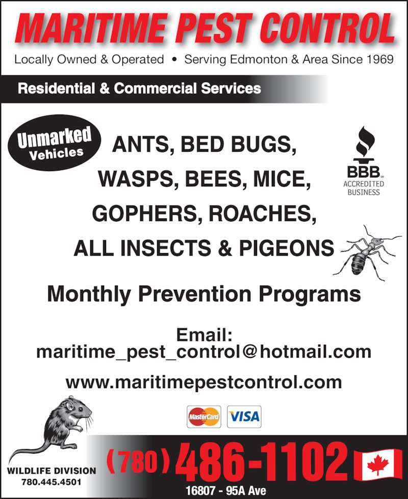 Maritime Pest Control (780-486-1102) - Display Ad - MARITIME PEST CONTROL Residential & Commercial Services Monthly Prevention Programs Email: www.maritimepestcontrol.com ( ) Locally Owned & Operated  ?  Serving Edmonton & Area Since 1969 WILDLIFE DIVISION 780.445.4501 Unmarked Vehicles ANTS, BED BUGS, WASPS, BEES, MICE, GOPHERS, ROACHES, ALL INSECTS & PIGEONS 16807 - 95A Ave MARITIME PEST CONTROL Residential & Commercial Services Monthly Prevention Programs Email: www.maritimepestcontrol.com ( ) Locally Owned & Operated  ?  Serving Edmonton & Area Since 1969 WILDLIFE DIVISION 780.445.4501 Unmarked Vehicles ANTS, BED BUGS, WASPS, BEES, MICE, GOPHERS, ROACHES, ALL INSECTS & PIGEONS 16807 - 95A Ave