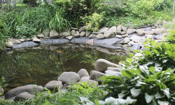 10 hints for maintaining your garden's pond