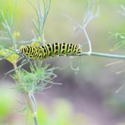10 bug-fighting basics for the garden