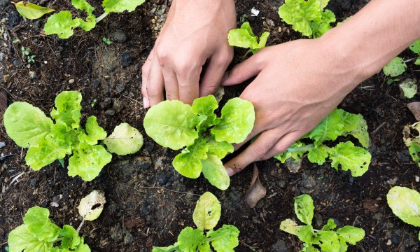 8 flowers and vegetables to plant this spring