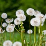 5 non-toxic ways to help control garden weeds