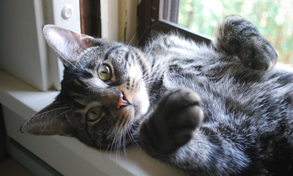 6 natural remedies to help heal your pets