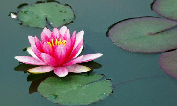 How to choose plants for your water garden